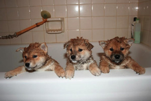 bathing_puppies